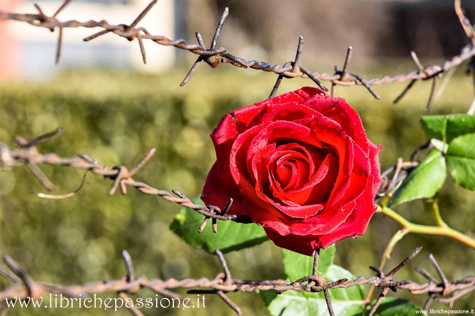 """Per non dimenticare! Poesie sull' Olocausto. """"Giornata della Memoria"""""""